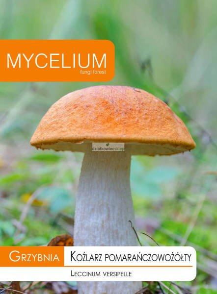 Grzybnia Koźlarz pomarańczowożółty 10 g