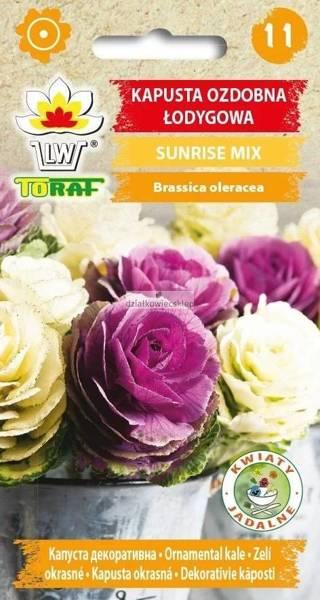 Kapusta ozdobna łodygowa - Sunrise Mix 10 szt.