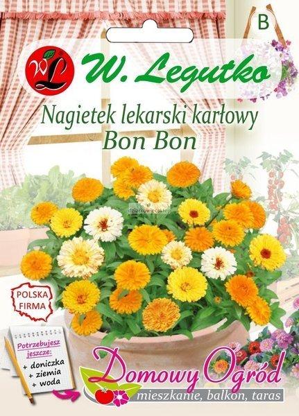 Nagietek lekarski karłowy Bon Bon (2 g) - Domowy Ogród