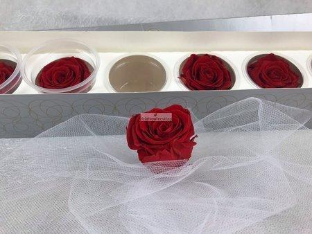 Róże wieczne (czerwone) 6 cm