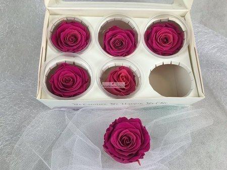Róże wieczne (różowe) 6 cm
