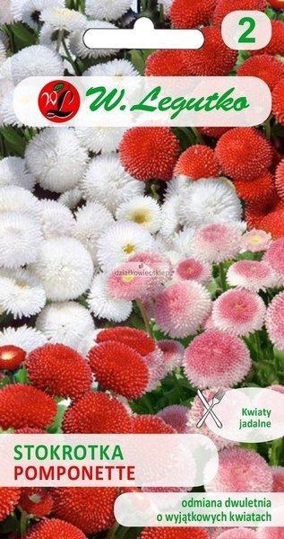 Stokrotka pospolita wielkokwiatowa, Pomponette - mieszanka (0,1 g)